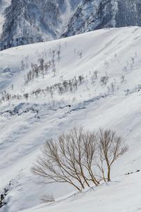 残雪期の八方尾根からの景色の写真素材 [FYI01826000]