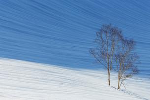 残雪模様と樹の写真素材 [FYI01826051]