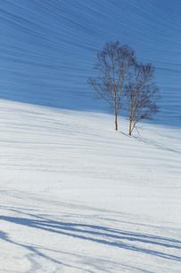 雪原と若木の写真素材 [FYI01826096]
