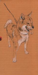 秋田犬のイラスト素材 [FYI01826126]