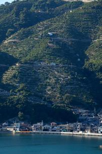 八幡浜のミカン山と海辺の町の写真素材 [FYI01826161]