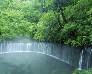 白糸の滝と渓流の写真素材 [FYI01834701]