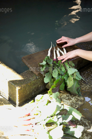 日野菜を洗う手の写真素材 [FYI01838814]