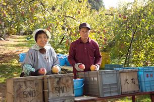 リンゴ農家の写真素材 [FYI01839623]