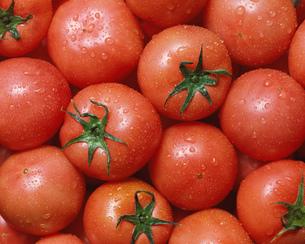 トマトの写真素材 [FYI01841386]