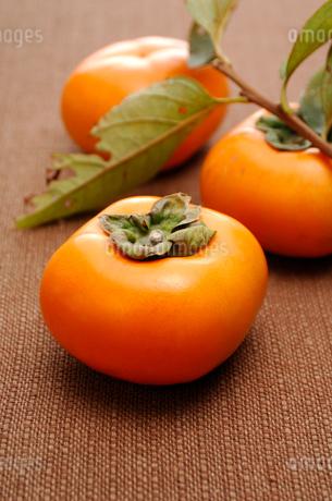 柿の写真素材 [FYI01846176]