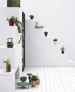 階段に置かれた植物の写真素材 [FYI01859095]