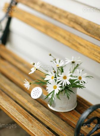ベンチの上のマーガレットの写真素材 [FYI01859466]