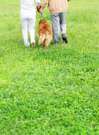 緑と日本人の中高年夫婦と犬の写真素材 [FYI01863298]