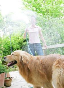 水を撒く女性と犬の写真素材 [FYI01867207]