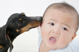 犬と赤ちゃんの写真素材 [FYI01873747]