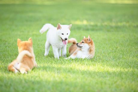 3匹の子犬の写真素材 [FYI01876110]