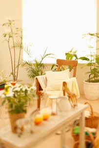 椅子と植物の写真素材 [FYI01883172]