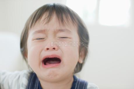 泣き顔の男の子の写真素材 [FYI01883705]