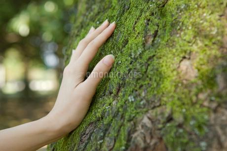 木に触る手の写真素材 [FYI01884023]