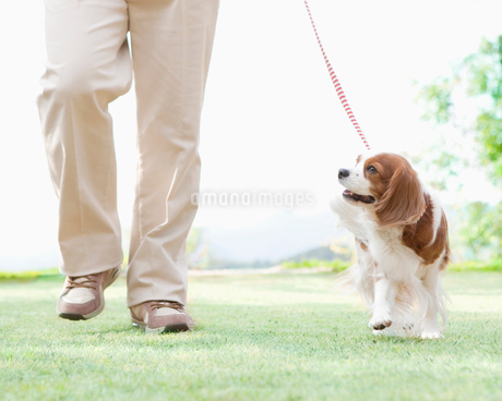 散歩する犬の写真素材 [FYI01895539]