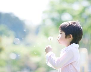 綿毛を吹く男の子の写真素材 [FYI01896952]