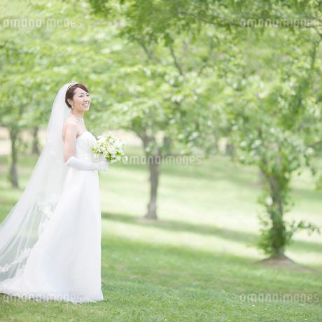 新緑の中に立つ新婦の写真素材 [FYI01897232]