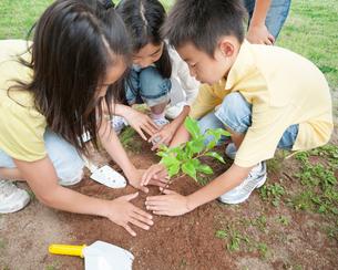 木の苗を植える子供達の写真素材 [FYI01898849]