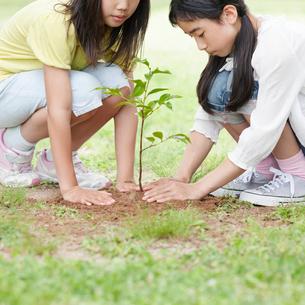 木の苗を植える2人の女の子の写真素材 [FYI01899126]