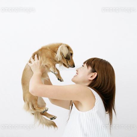 犬を持ち上げる女性の写真素材 [FYI01899262]