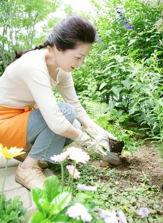 庭の植物の世話をするシニア女性の写真素材 [FYI01900008]