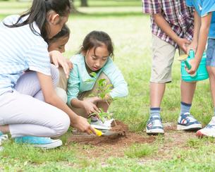 木の苗を植える子供達の写真素材 [FYI01900221]
