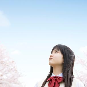 桜と女子中学生の写真素材 [FYI01902019]