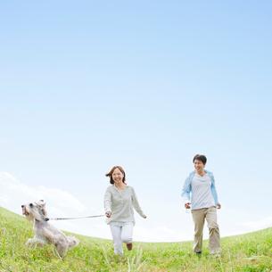 草原で犬と散歩をする日本人夫婦の写真素材 [FYI01904762]