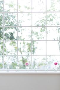 窓辺に飾られた花の写真素材 [FYI01905679]