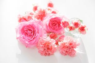 バラとカーネーションの写真素材 [FYI01906175]