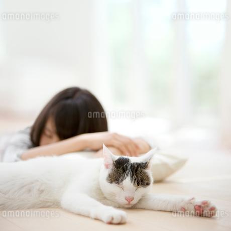 眠る猫と女性のシルエットの写真素材 [FYI01907507]