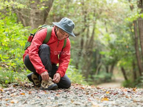 靴紐を結ぶ中高年男性の写真素材 [FYI01913130]
