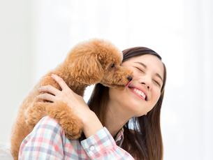 女性の顔を舐めるトイプードルの写真素材 [FYI01914118]
