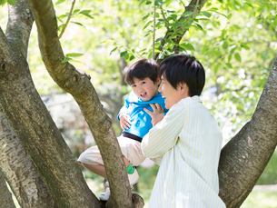 木登りをして遊ぶ父と息子の写真素材 [FYI01917660]