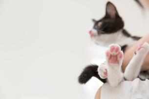猫の肉球の写真素材 [FYI01919784]
