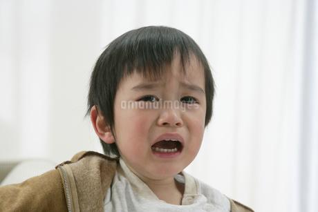 泣く男の子の写真素材 [FYI01921429]