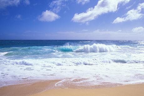 ハワイ 南国スナップの写真素材 [FYI01922719]