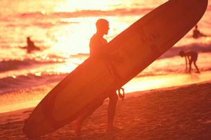 ハワイ 南国スナップの写真素材 [FYI01922752]