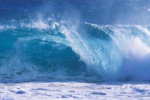 ハワイ 南国スナップの写真素材 [FYI01922784]