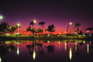 ハワイ 南国スナップの写真素材 [FYI01922805]