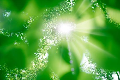 新緑・陽射しイメージの写真素材 [FYI01923016]