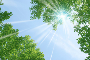 新緑・陽射しイメージの写真素材 [FYI01923020]