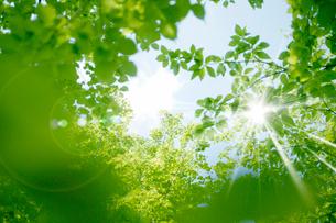新緑・陽射しイメージの写真素材 [FYI01923260]