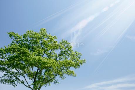 新緑と青空の写真素材 [FYI01923280]