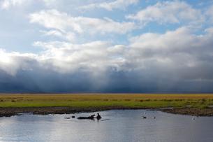 水辺のカバの写真素材 [FYI01923631]
