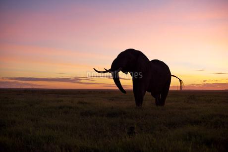 オレンジの空と象の写真素材 [FYI01923887]