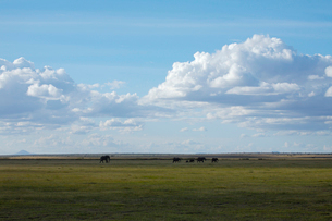 象のいるサバンナ遠景の写真素材 [FYI01923955]