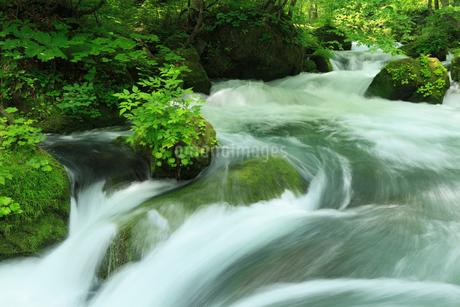 渓流の写真素材 [FYI01925447]