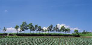 樹木 飯田高原 大分県の写真素材 [FYI01925730]